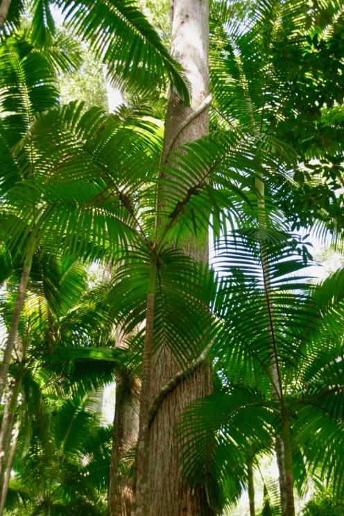 Regenwald auf Fraser Island