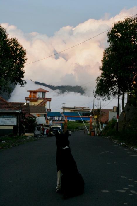 Hund schaut den Wolken zu