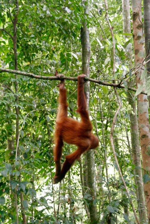 Kleiner Akrobat im Dschungel