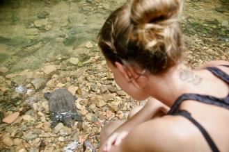 Schildkröte im Urwald