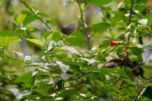Schmetterling im Dschungelcamp