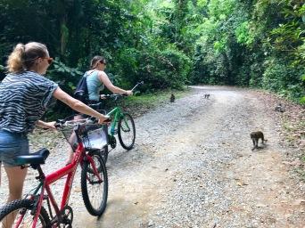 Begegnung mit Makaken während Radtour