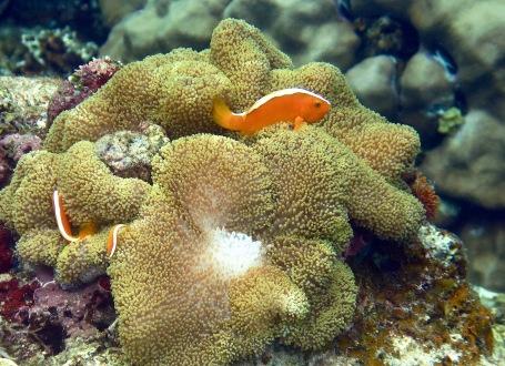Findet Nemo bei Port Barton