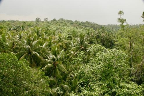 Grünes Idyll nur wenige Kilometer entfernt von der Metropole Singapur