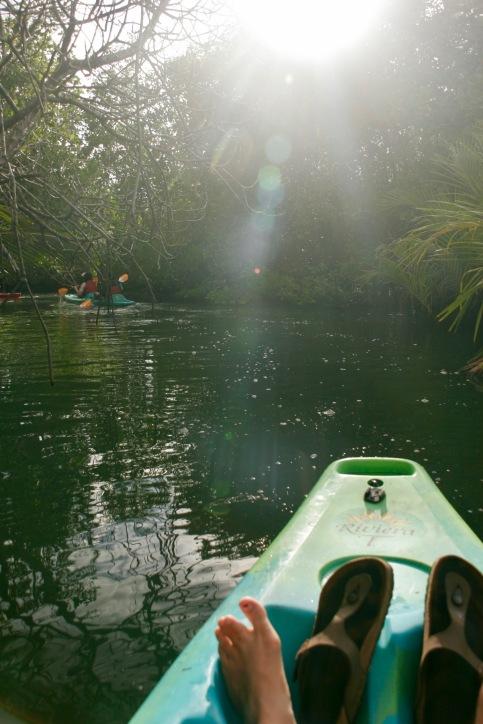 Letzte Sonnenstrahlen zwischen den Mangroven