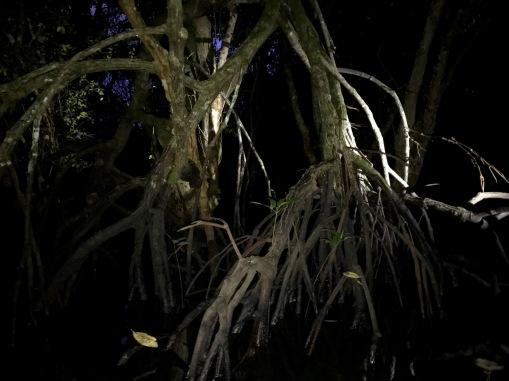 Mangroven bei Nacht in Bohol