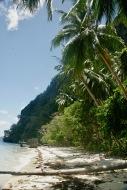 Palmengesäumter Strand auf Palawan