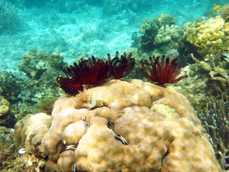 Wunderschöne Korallen bei unserem Tauchgang