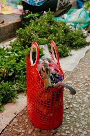 Arme Ente wurde einfach in die Einkaufstasche gepackt