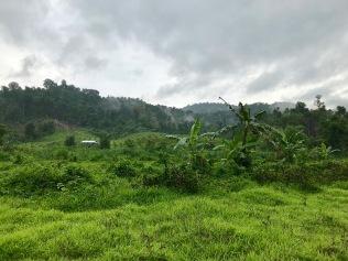 Auf dem Weg in den Dschungel vorbei an Hügeln