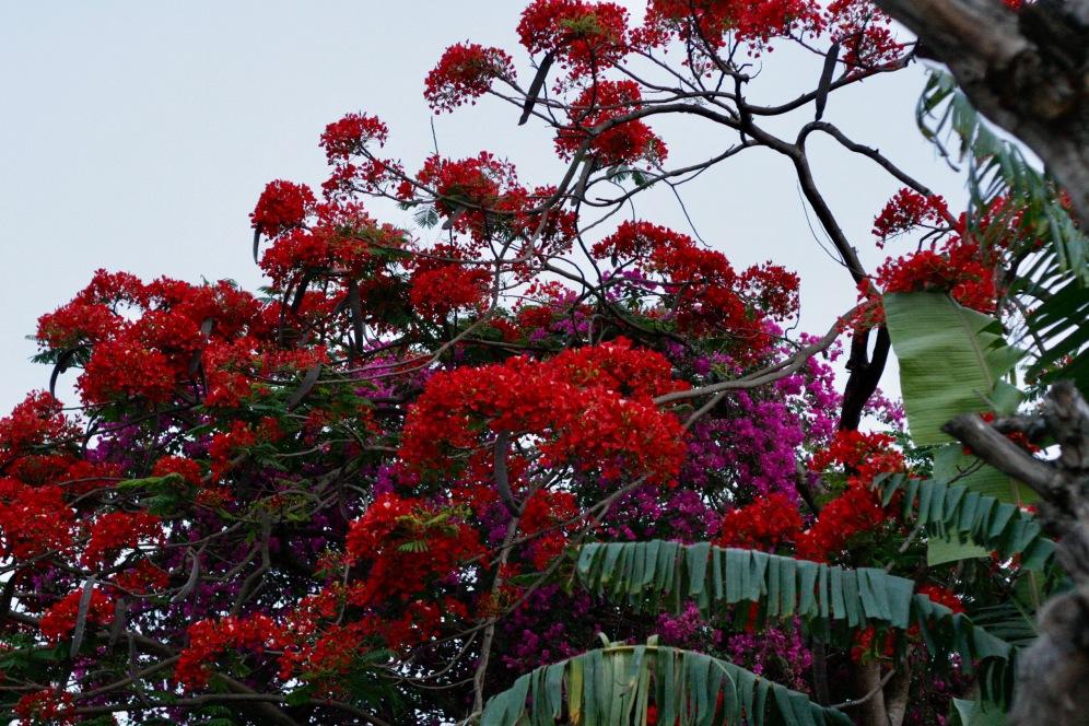 Blütenpracht in Nyaung Shwe