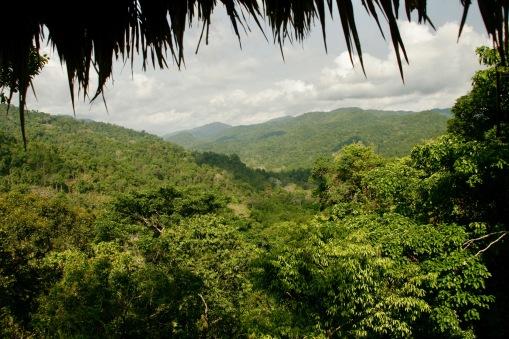 Blick von einem der Baumhäuser bei der Gibbon Experience