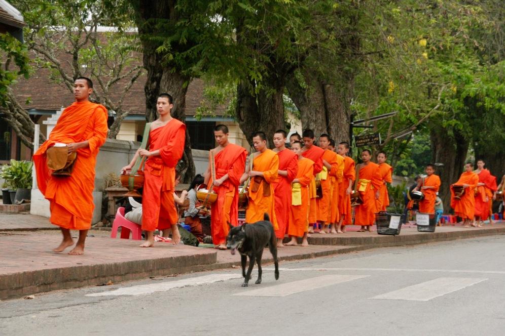 Ein Hund begleitet die Mönche