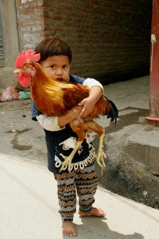 Ein kleiner Junge mit seinem Hahn in Kathmandu
