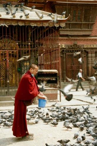 Ein Mönch füttert die unzähligen Tauben