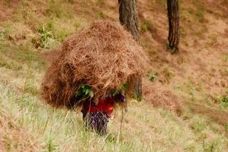 Eine Frau schleppt einen schweren Strohhaufen