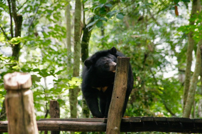 Rehabilitationszentrum für Malaienbären