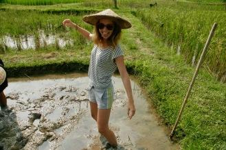 Reis pflanzen bei der Living Land Farm