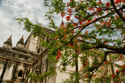 That Bin Nyu mit blühenden Bäumen