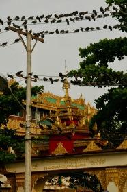 Unzählige Tauben in der Kyaethoon Pagoda in Yangon