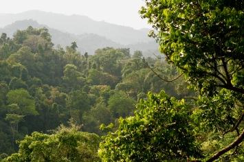 Wunderschöner Dschungel im Norden Laos'