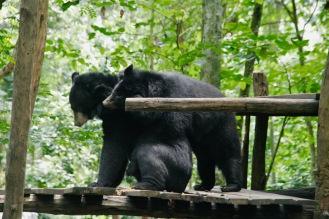Zwei Malaienbären