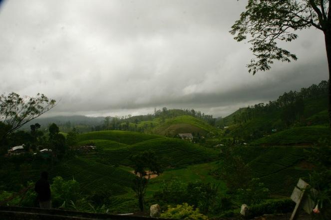 Akurat angelegte Teeplantagen im Hochland Sri Lankas