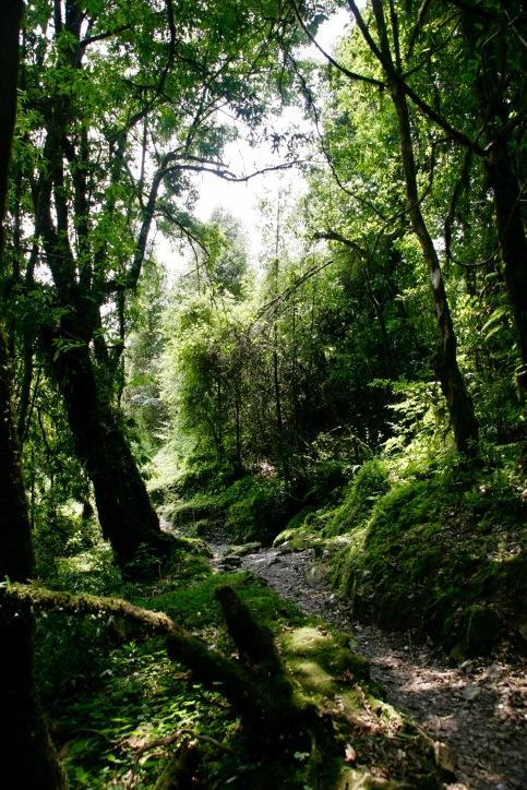 Am zweiten Tag geht's durch einen Märchenwald