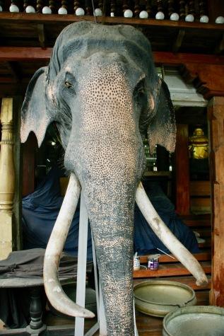 Ausgestopfter Eelefant im Gangaramaya Tempel