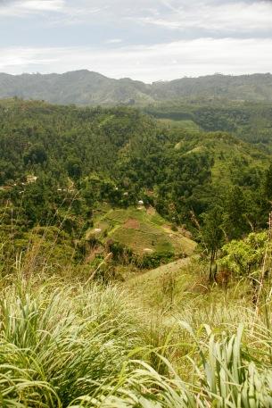 Aussicht vom Little Adam's Peak - Teeplantagen