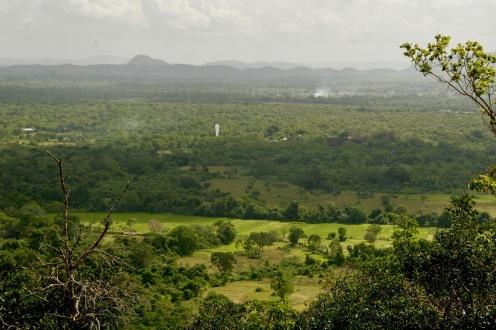 Aussicht vom Pidurangala Felsen über die Felder Sri Lankas