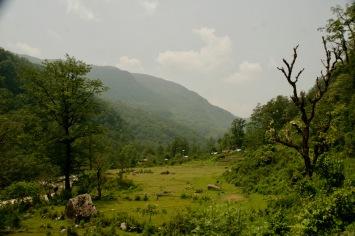 Blick über die grünen Felder auf dem Poon Hill Trek