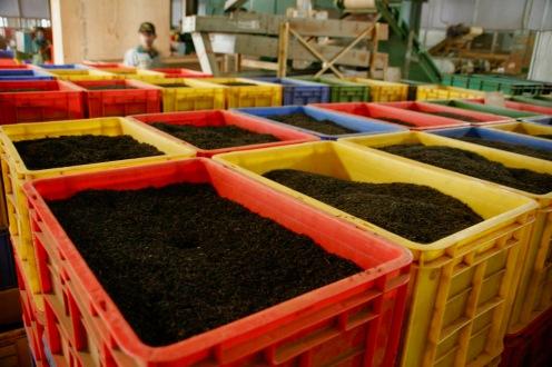 Boxen voller Schwarztee bei der Halpewatte Teefabrik