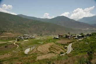 Felder und Reisterrassen im Punakha Tal