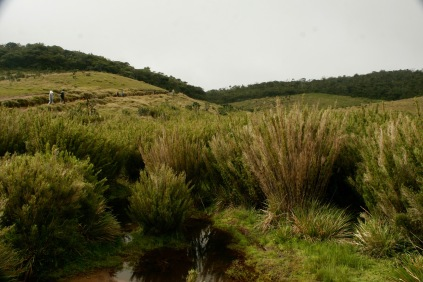 Graslandschaft in den Horton Plains
