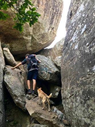 Hund begleitet uns auf den Pidurangala Felsen