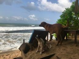 Hunde im Cinnabar Resort