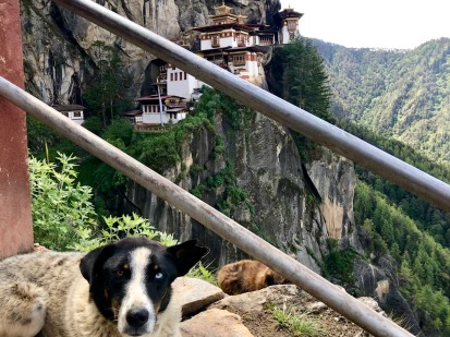 Hunde mit unterschiedlichen Augen bringen angeblich Glück