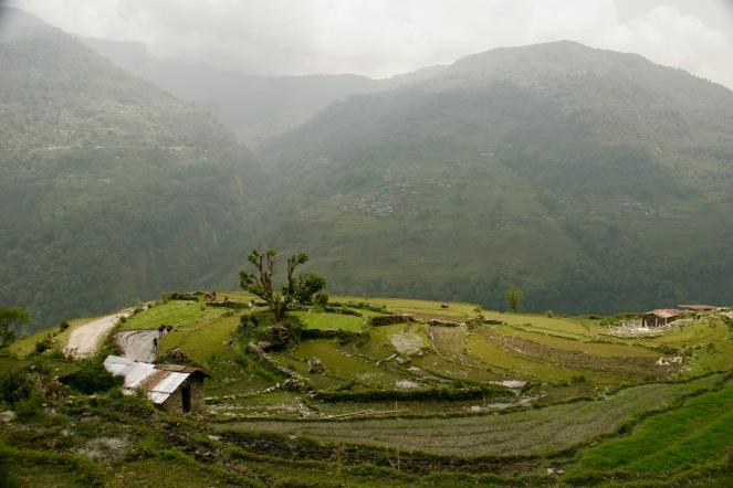 Reisterrassen mit arbeitenden Einheimischen mit den Büffeln