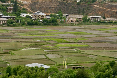 Unzählige Felder im Paro Tal - jedes Fleckchen wird genutzt