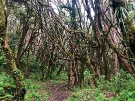 Verwunschener Märchenwald am zweiten Tag