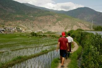 Wanderung durch Reisfelder zum Chimi Lhakhang