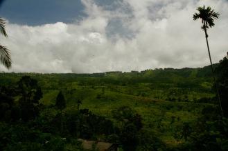 Wir lieben Sri Lankas Teeplantagen