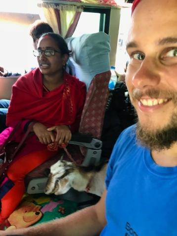Ziege im Bus zurück von Nayapul nach Pokhara