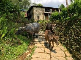 Zweiter Tag - riesige Büffel begrüßen uns auf den unzähligen Treppen