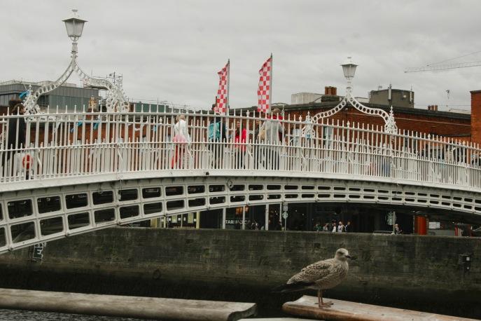 Ha'penny Bridge mit Möwe in Dublin