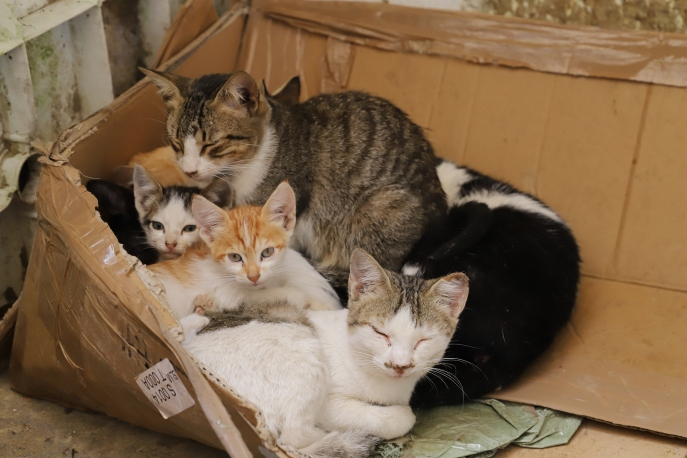 Fès - Katzen sonnen sich