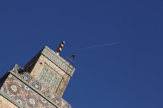 Fès - die Störche sind im Winter vor allem in Marokko