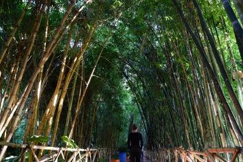 Marrakesh - Bambuswald im Jardin de Majorelle