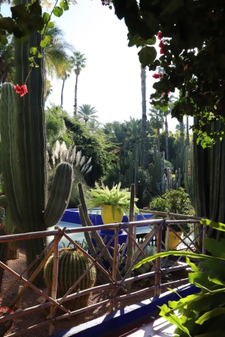 Marrakesh - Kakteen im Jardin de Majorelle